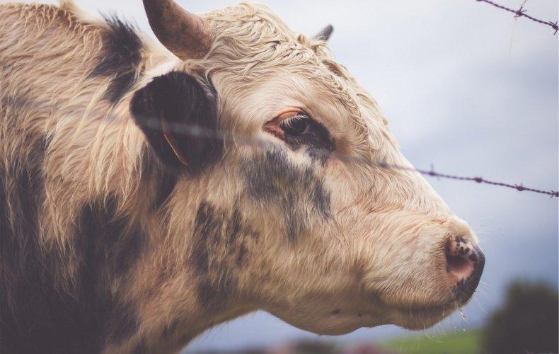 Россельхознадзор отказался отзапрета напоставки белорусского молока